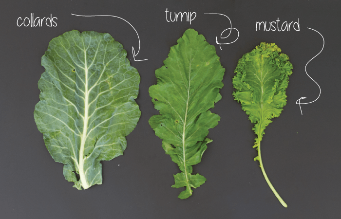 leaf types: collard greens, mustard greens, turnip greens